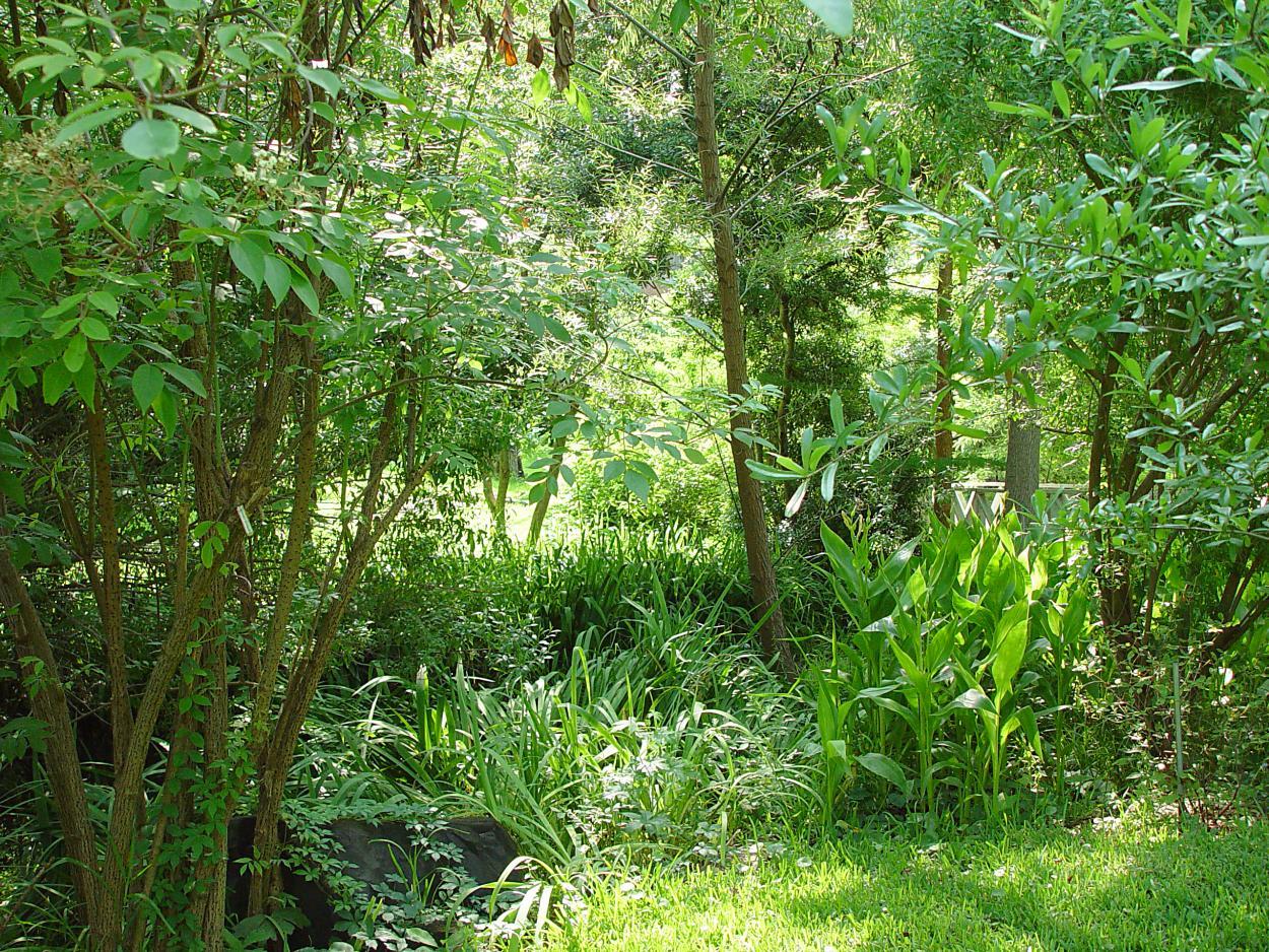 st_arboretum_vegetation_50_ans.jpg